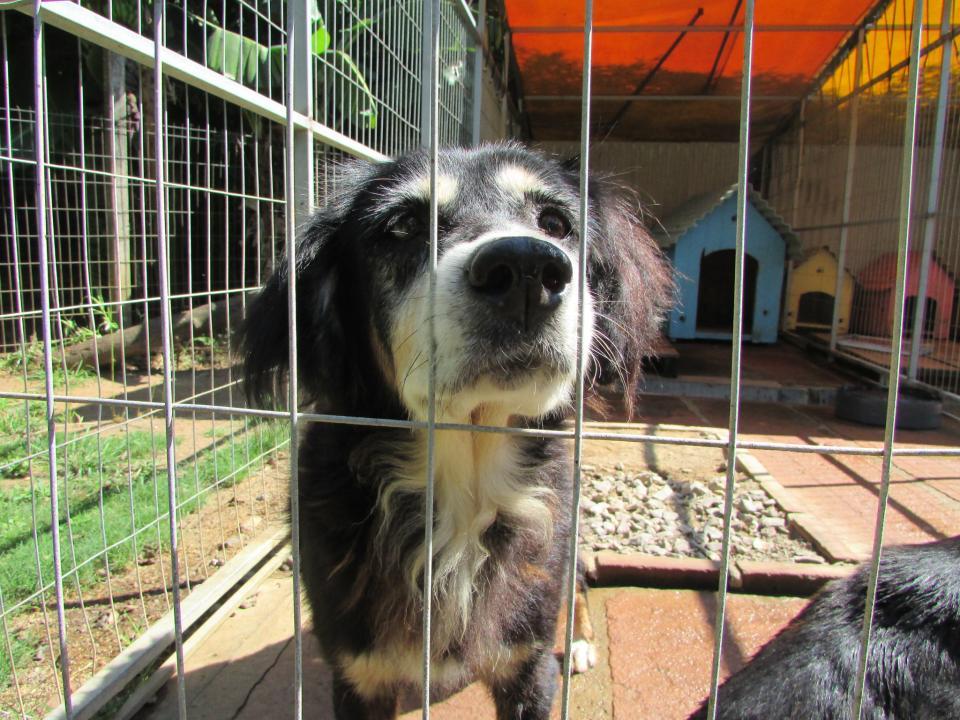 Feira junina boa para cachorro