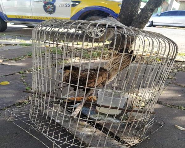 Grupamento Ambiental resgata ave carcará no bairro Vicentina